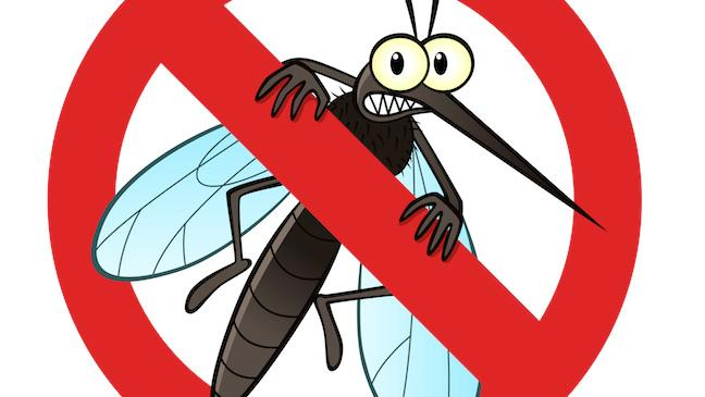 Image result for mosquito control